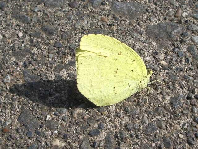 20060215-1.jpg