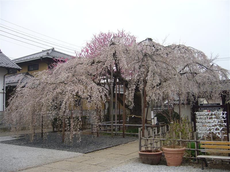 20060328-1.jpg